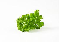 Fresh parsley sprigs