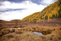 Autumn forest in Altai mountain