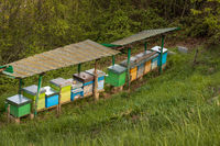 Bee hives in mountain close up
