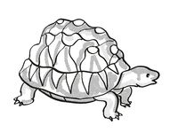 Radiated Tortoise Endangered Wildlife Cartoon Mono Line Drawing