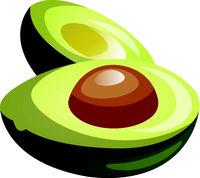 Green avocado cut in half cartoon fruit vector illustration on white background.