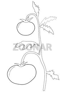 Tomato bush outlines