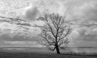 Tree at Lake Tetzitz