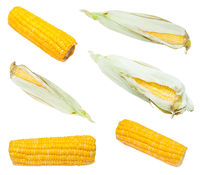 set from fresh and boiled ears of corn isolated