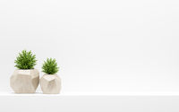 green plants in wooden pots on white shelf