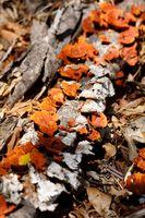 Mushroom on the trunk, Madagascar rainforest
