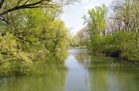 riparian forest near Danube river