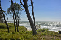 baltic sea western beach at the Darss-Forest