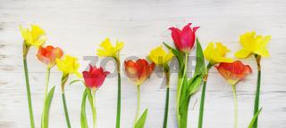 Ostern, Frühling, Tulpen, Narzissen, Osterglocken, auf Holz, Banner, Header, Headline, Panorama, Tex