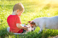 Cute Baby Boy Sitting In Grass Playing With Dog