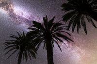 Purple Milky way falling stars palm trees