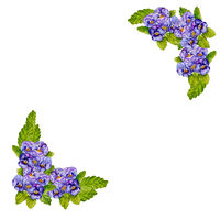 Watercolor bouquets of pansies in the form of a frame.