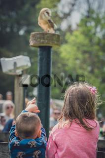 Children watching birds of prey show