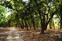 Tala zone forest, Bandhavgarh, Madhya Pradesh, India
