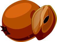 Orange chico cut in half  cartoon fruit vector illustration on white background.