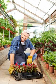 Florist arbeitet in Gärtnerei
