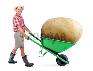 Cheerful gardener carrying a large potato. A man farmer pushing a wheelbarrow with big potato. Successful vegetable grower. Large harvest of genetically modified foods.