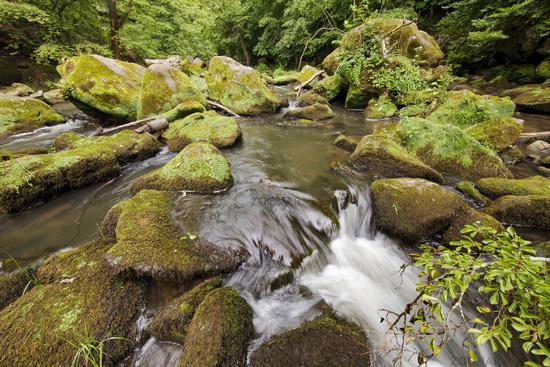 rapids called Irreler Wasserfaelle of the South Eifel Nature Park, Irrel, Eifel, Germany, Europe