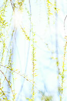 Green leaves in springtime, nature background