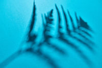 Reflection of the shadow of a fern branch on a blue background with copy space. Creative photo for your ideas. Top view