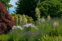 scenic summer flower bed featuring several white yucca filamentosa, phloxes, thistles and lavender