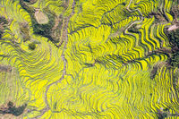 color of terraced field in spring