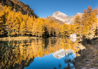 yellow larch trees and mountain lake with reflections in late autumn