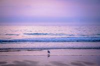 Seagull bird on the beach at dusk
