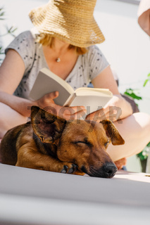 Woman reading in her book on a hot summer day while her tired dog is sleeping on a deck chair.