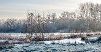 Frozen marsh lands in a winter landscape