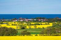 Blick über blühende Rapsfelder auf die Ostsee bei Kühlungsborn
