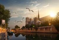 Seagulls over Notre Dame