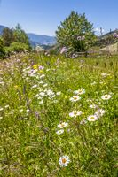 Summery mountain meadows in the rear Villnoesstal