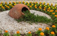 Chrysanthemums and pottery urn in ornamental garden