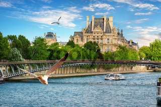 Seagulls over Seine