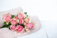 Pink roses on a pink blanket