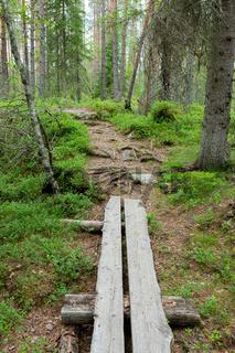 Small duckboard trail in Finnish forest landscape