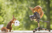 red squirrels on a camera with a ball