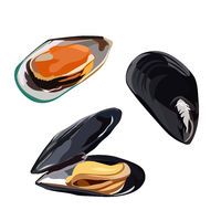 Raw mussels in shells icon isolated on white background, healthy food, fresh seafood, vector illustration.