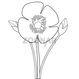 Poppy flower outlines
