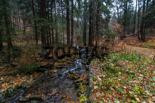 A small river in the autumn forest on the slopes of the Krkonose Mountains (Giant Mountains). Czech Republic.