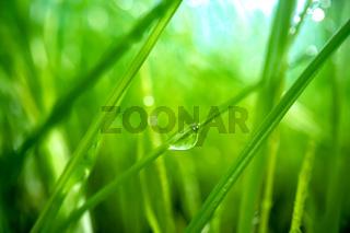 Green grass close-up super macro shooting.