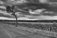 On the empty road between fields