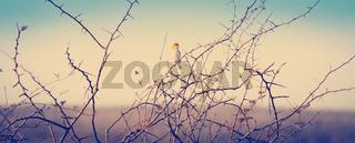 Bird in Botswana Africa
