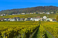 Vineyards of the municipality of Mont-sur-Rolle in autumn colours, Mont-sur-Rolle, Vaud, Switzerland