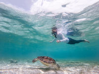 Woman on vacations wearing snokeling mask swimming with sea turtle in turquoise blue water of Gili islands, Indonesia. Underwater photo.
