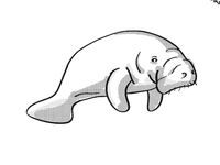 Manatee or sea cow Endangered Wildlife Cartoon Mono Line Drawing