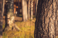A Pine tree growing beside a river bank full of grass over blue water background closeup shot