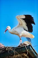 Storch flattert mit den Flügeln