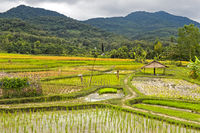Landscape with rice fields, Luang Prabang, Laos